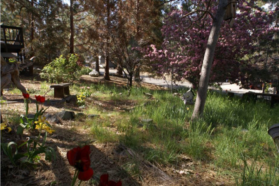 GC - Springtime front yard